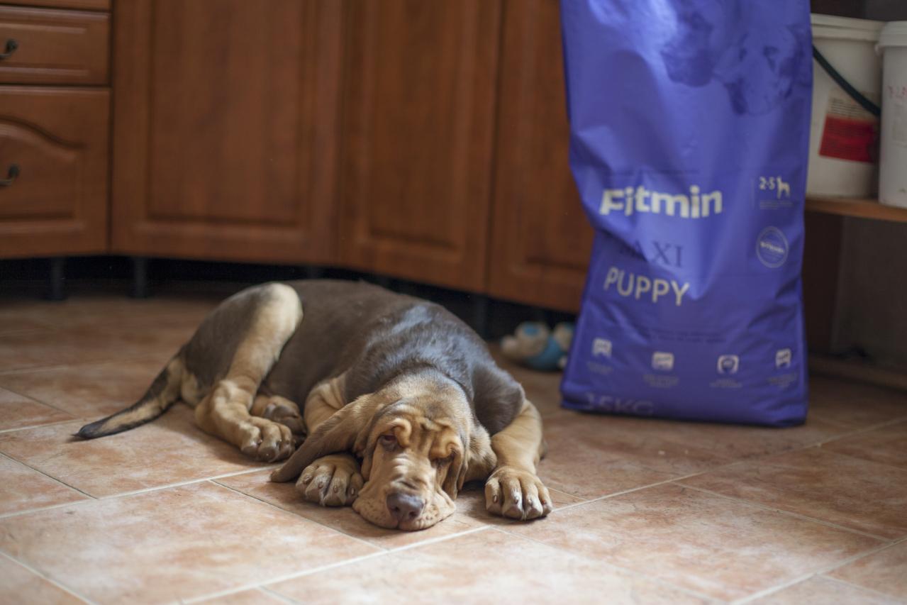 Собака и Fitmin